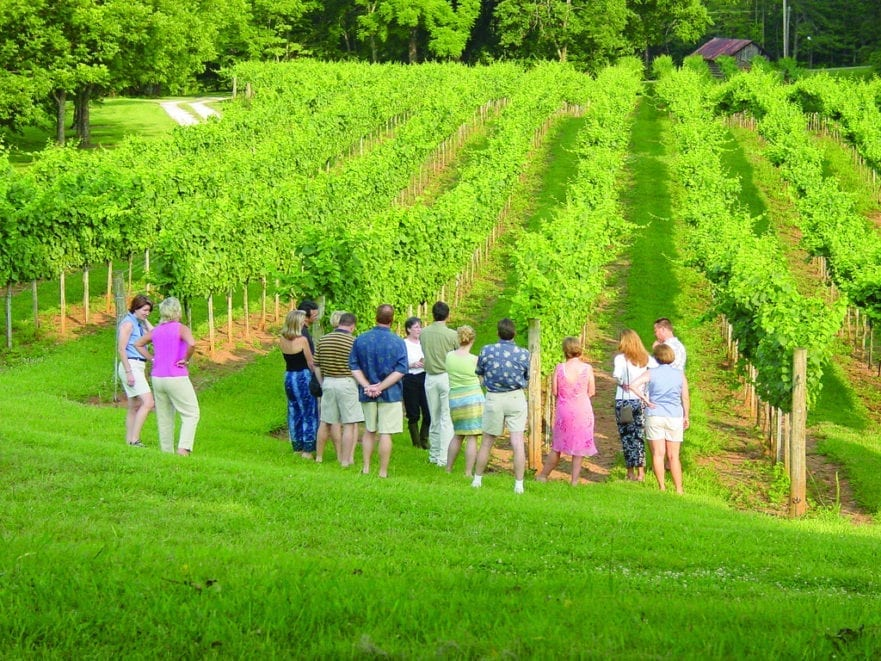 Need HR Department image of team in a vineyard looking productive
