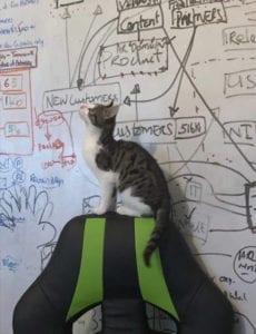 Lola the HRLocker office cat
